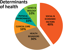 determinants_piechart250